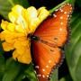 Sodų puošmenos – drugeliai