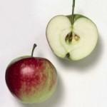 obuolis