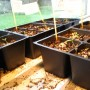 Dėžių ir kitų talpų paruošimas pomidorų daigams auginti