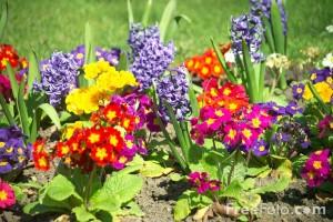 Gėlių sodinimas