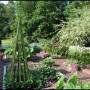 Liepos mėnesio darbai sode ir darže