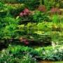 Dekoratyvinis lauko baseinas ir augalai