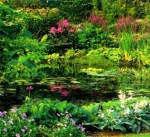 baseinu augalai