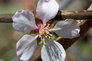 solitary-white-blossom-geles-ziedas
