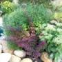Lapiniai augalai: nes ne vien žiedai puošia mūsų sodus