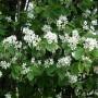 Nereiklūs sodo augalai, puošiantys ir maitinantys (II dalis)