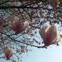 Pavasarį žydinčiais augalais domėkimės rudenį