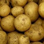 bulviu ligos ir kenkejai