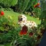 Sodui jaukumo gali suteikti ir šuo