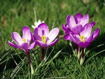 """Vaizdo rezultatas pagal užklausą """"pavasario gėlės"""""""