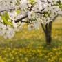 Sodininko patarimai pavasario darbų klausimu