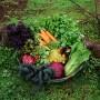 Kaip tinkamai pasirinkti, ką sodinti savo darže?
