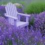 Levanda – aromaterapijos karalienė