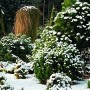 Visžaliai augalai – žiemos sodo puošmena