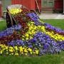 Gėlių kompozicijų harmonija