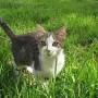 Jei į sodą atsivežėte naminę katę