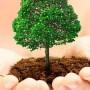 Kaip teisingai pasodinti medį