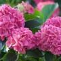 Pavojingos sodo gėlės