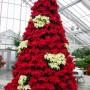 Kokiais augalais galima pakeisti kalėdinę eglutę?