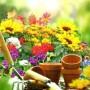 Sodo idėjų mugė kvies puošti namų aplinką