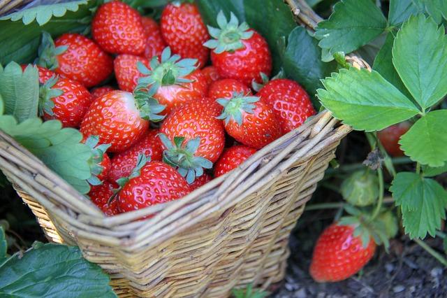 Kaip užsiauginti braškių savo sode?